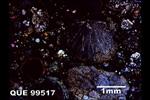 QUE 99517 - Cross-Polarized Light