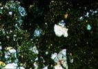 GRO95633 TS - Cross Polarized Light