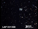 LAP 031308 - Cross-Polarized Light